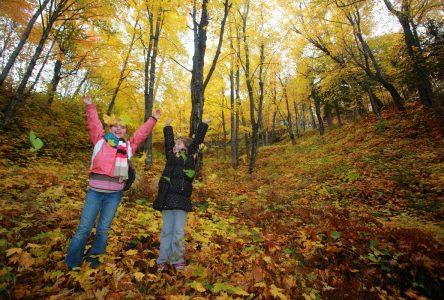 Féérie des couleurs : Des activités pour tous sur une montagne époustouflante