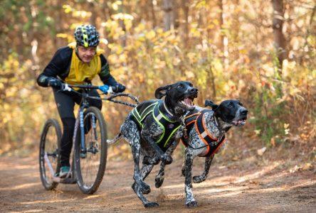 Sports canins attelés: De belles performances du club régional aux Championnats canadiens