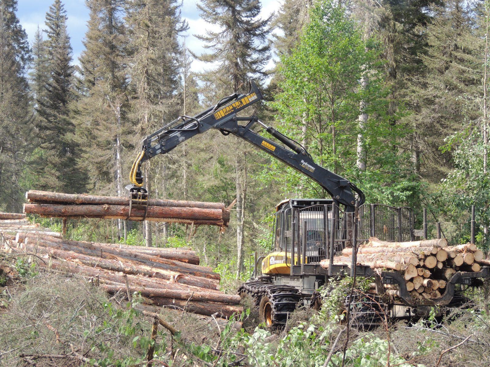 Alliance forêt boréale: Régime forestier et tordeuse au menu en 2020
