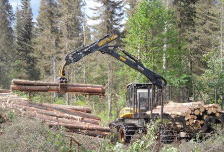 L'Alliance Forêt Boréale déçue du plan de relance de Legault