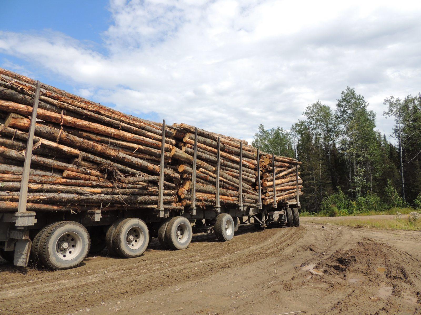 Industrie forestière : cri d'alarme pour plus de prévisibilité dans les approvisionnements