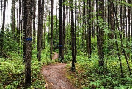 Vélo de montagne: C'est le temps d'aller se dégourdir
