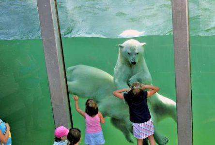 Zoo Sauvage de Saint-Félicien: un bilan financier positif malgré la pandémie