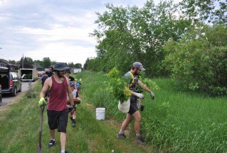 Plantation de 400 arbres : Du « reboisement social » à Alma