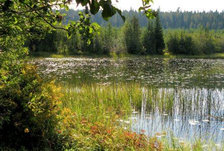 MRC de Lac-Saint-Jean-Est: Un comité de directeur pour la gestion des milieux humides et hydriques