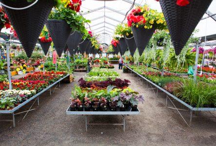 Jardinage: vers une autre très grosse saison ce printemps