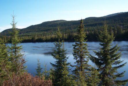 Le mois de l'arbre et des forêts en branle dans la région